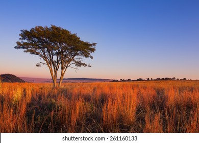 Magical sunset in Africa with a lone tree on a hill and thin clouds