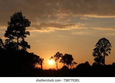 Magical sunset with forest silhouette