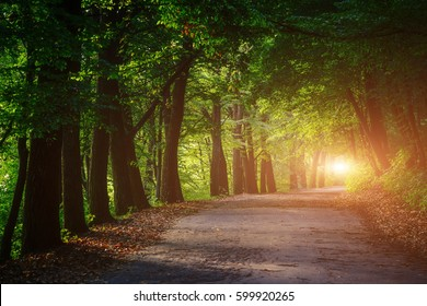 Magical tunnel and pathway through a thick forest glowing by sunlight. The path framed by bushes. Dramatic and gorgeous scene. Location place Ternopil, Ukraine, Europe. Discover the world of beauty.