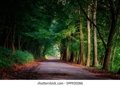 Magical tunnel and pathway through a thick forest with sunlight. The path framed by bushes. Dramatic and gorgeous scene. Location place Ternopil, Ukraine, Europe. Discover the world of beauty.