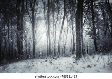 magical winter forest with snow flakes falling