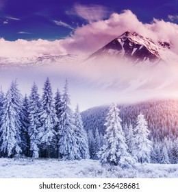 magical winter landscape