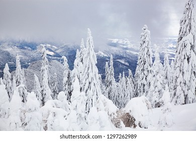 magical winter landscape with snowy firs in the mountains