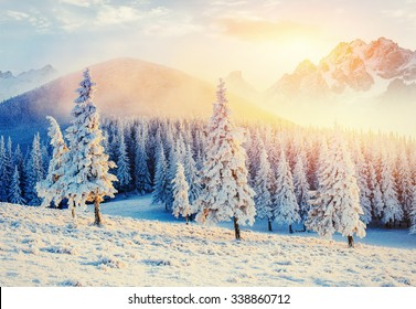 magical winter snow covered tree. Sunset in the Carpathians. Ukraine, Europe