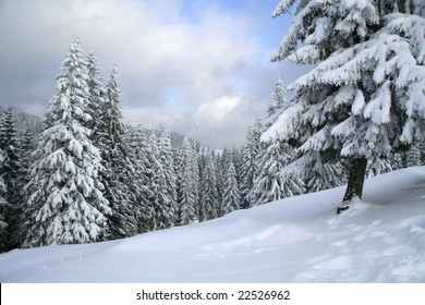 Magical winter woods covered with fresh snow