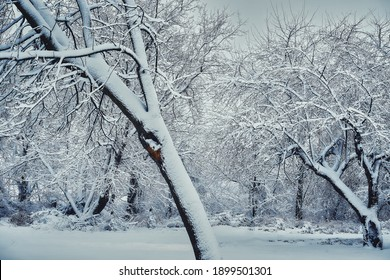 It is a magical and wintry landscape that we found this morning. We have a hard time seeing the branches covered with snow. Beautiful landscape. Quebec, Canada, January 17, 2021.