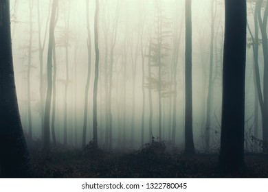 magical woods background, trees in fog in fantasy landscape