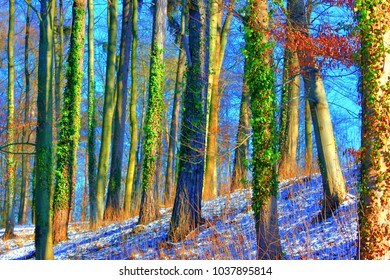 The magical world of the forest in colorful colors / Hiking in nature is good for soul mind and body