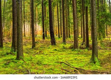 Die magische Welt des Waldes in farbenfrohen Farben / Wandern in der Natur ist gut für Geist und Körper