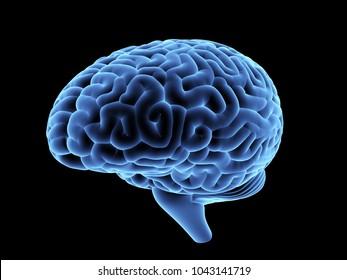 Magnetic resonance image of the human brain. 3D illustration.
