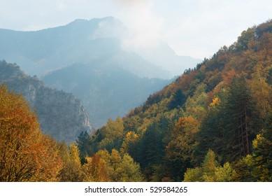 Magnificent autumn carpet in The Rhodope montains, Bulgaria