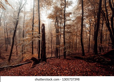 Magnificent colors in the nature, forest, Season, autumn