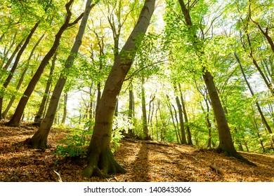 Magnificent green beech woods with sunshine in the national Park