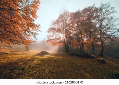 magnificent mountains view, marvelous gold autumn dawn image, meadow on  autumn beech trees at  morning sunrise haze, gorgeous nature background forest, Carpathians, Ukraine, Europe meadow landscape