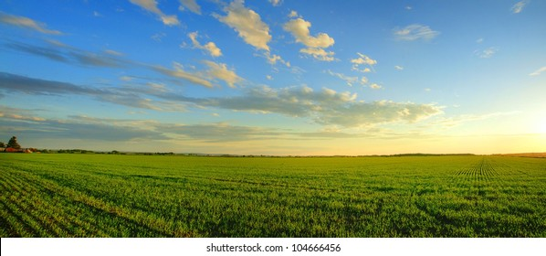 Magnificent panorama of  a sunrise over a newly planted cereal field- beautiful nature, dramatic HDR rendering.