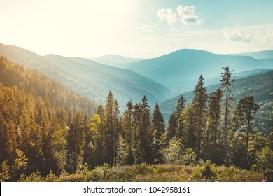 Magnificent panoramic view the coniferous forest on the mighty Carpathians Mountains and beautiful blue sky background. Beauty of wild virgin Ukrainian nature. Peacefulness.