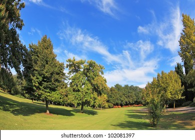 Magnificent park in northern Italy in wonderful summer day. The charming green grassy lawn is surrounded with coniferous trees and blossoming bushes