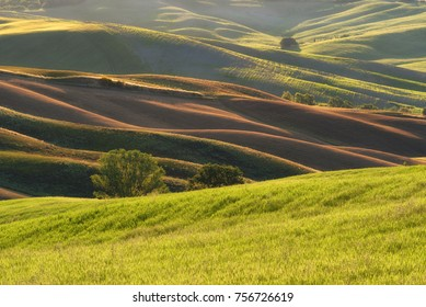 Magnificent spring rural landscape. Beautiful view of typical green wave hills, cypresses trees, magical sunlight, beautiful golden fields and meadows.Italy, Europe