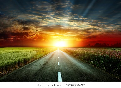 Magnificent view of the asphalt road in the background of the sunset. The road between the fields of wheat and steppe grass. Beautiful sunset on the horizon.