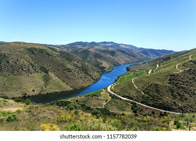 Magnificent view of the low altitude schisty hills, river and vineyards terraces of the Douro Valley, Portugal