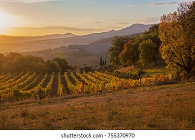 Magnificent view of picturesque autumn vineyards in the Tuscany region in morning sunlight, Italy