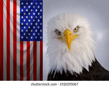 Magnificent white-headed eagle with a stern look close-up on the background of the US flag