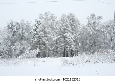 Magnificent winter frosty landscape for background splash  The beauty of the winter forest in Russia, this is not sand in the desert.