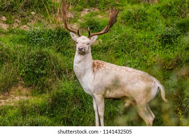Magnificent young deer with large horns. Exotic journey to the South Island, New Zealand. Concept of active and ecological tourism