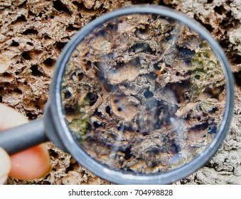 Magnifying glass look like termite