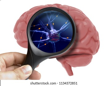 Magnifying glass on human 3d brain neurons activity isolated on white