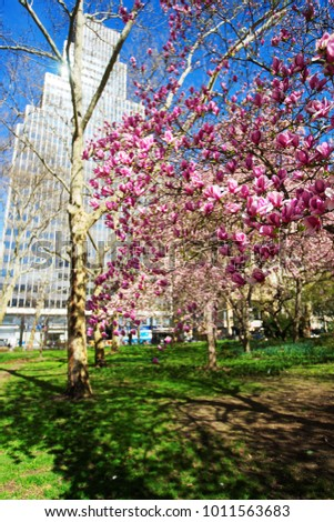 Magnolia Tree Blooming City Hall Park Stock Photo Edit Now