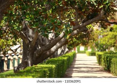 Magnolia tree over blured background