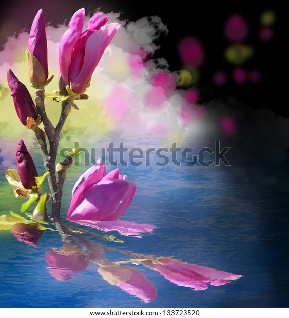 magnolia water reflection