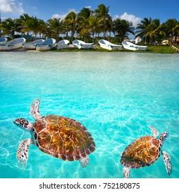 Mahahual Caribbean beach turtle photomount in Costa Maya of Mexico