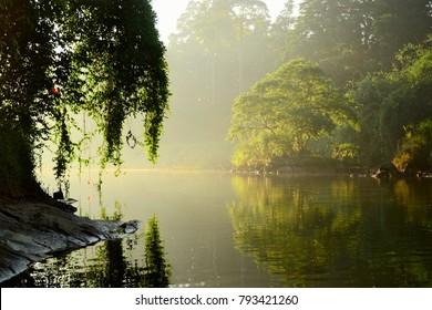 Mahaweli river with sunny morning light. Bright tree reflected in a water.  Early morning time. Tropical landscape near Royal Botanical Gardens in Peradeniya, Kandy, Sri Lanka