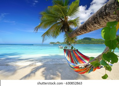 mahe Island, seychelles - Romantic cozy hammock in the shadow of the palm on the tropical beach by the sea