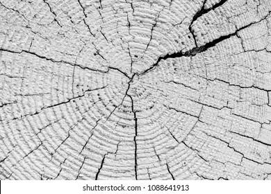 Mahogany tree, Life rings, mahogany tree in white paint, crack on tree, background, texture
