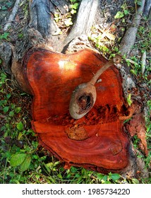 A mahogany tree that is cut and has mahogany fruit on it looks natural in autumn