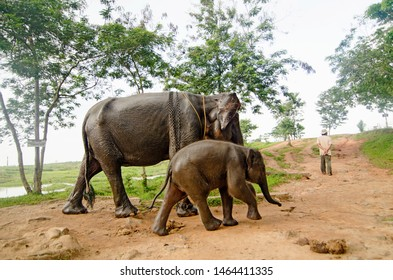 Mahout and elephans in the Way Kambas National Park in Lampung, Indonesia. On Saturday July 22, 2017.