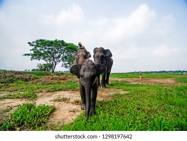 Mahout (Elephant Handler) and Elephans in Way Kambas National Park, Lampung, Indonesia. On Saturday, July 22, 2017.