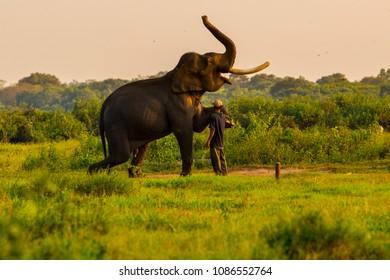 mahout elephant relationship