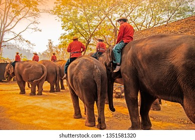The mahout train elephant to pull the log.They have show twice in day. In The Thai Elephant Conservation Center(TECC) at Conservation Center Lampang, Hang Chat, Lampang, Thailand on March 13,2019