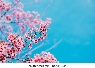 Mai Anh Dao is Vietnamese name of a one-of-a-kind flower in Da Lat which blooms in the first months of the year to welcome spring. It has been a proud symbol of local people. Cinematic color style
