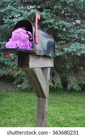 Mailbox Filled with Flowers