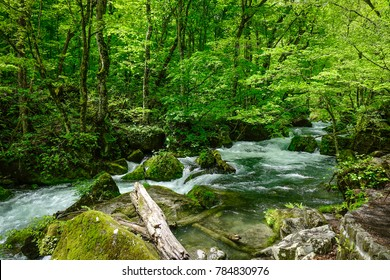 Main stream of Oirase Gorge at summer in Aomori, Japan. The Oirase Gorge is one of the most beautiful river valleys in Japan.