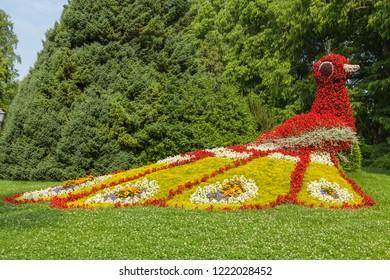 mainau flower island Germany colorful peacock made of flowers