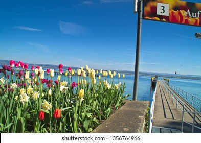 Mainau Island, Lake Constance, Baden-Wuerttemberg / Germany - May 24, 2016 Tulips in full splendor at the jetty of the island Mainau. A real pleasure to see and enjoy it here on the flower island.