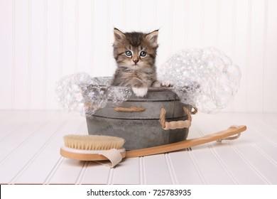 Maincoon Kitten With Big Eyes Taking a Bubble Bath