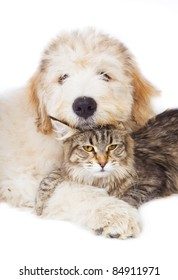 Maine Coon cat and pup of the South Russian Shepherd