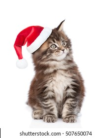 Maine coon cat in red santa hat looking away. isolated on white background